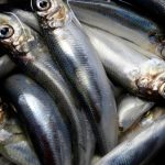 Truck dumps more than 5,000 litres of herring on Swedish road