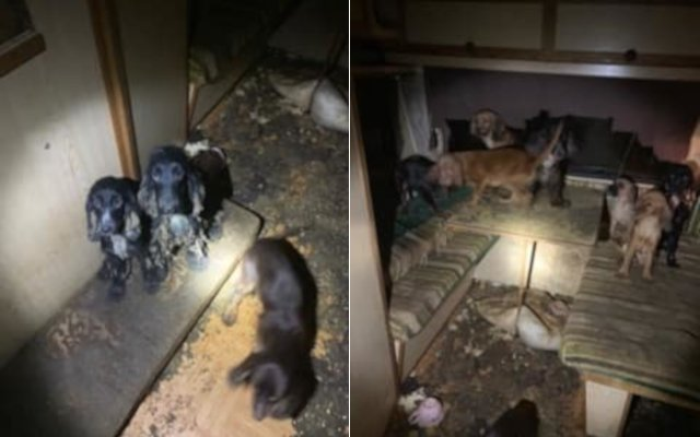 Shock as almost 80 dogs found living in 'neglect and misery' in northern Sweden