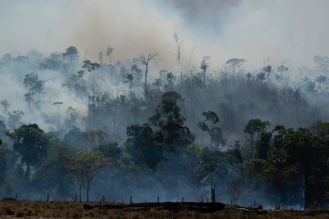 Temporary ban: H&M stops buying Brazilian leather in response to Amazon fires