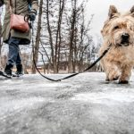 Sudden winter chill tightens its grip on Sweden (yes, ALL of Sweden)
