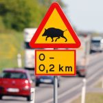 Driving in Sweden: How to avoid wildlife collisions