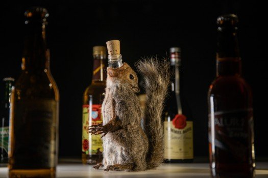 Poop wine? Vile alcohol goes on show at Swedish museum