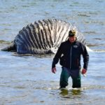 Swedish islanders warned to 'stay away from explosive whale'