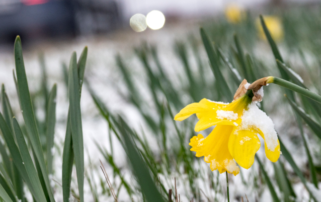 Here's when it might snow where you are in Sweden